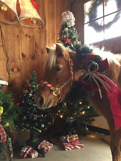 10 Gifts Equestrians Would Love to Get This Christmas