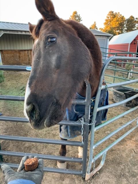 Soft Homemade Horse Treats