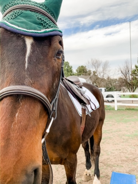 How to Be Consistent with Your Horse