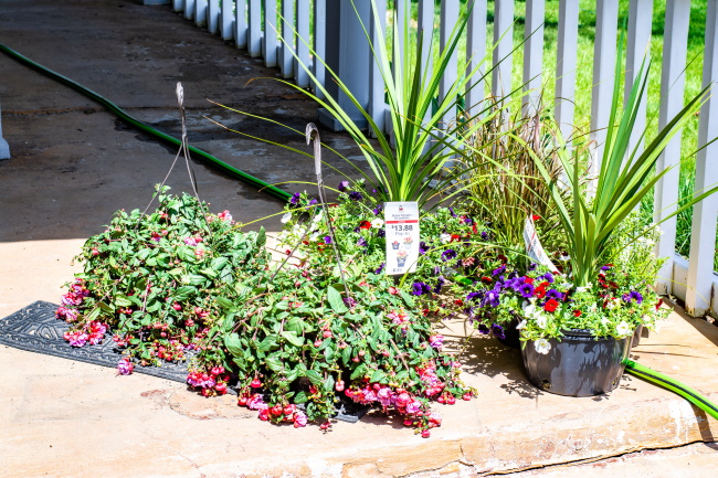 DIY Tall Planters