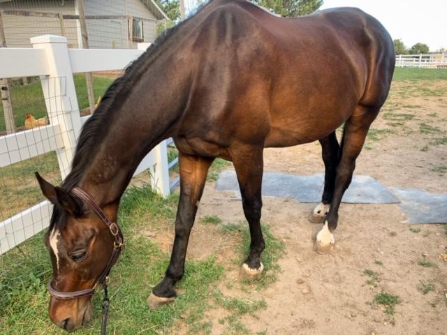 shiny horse