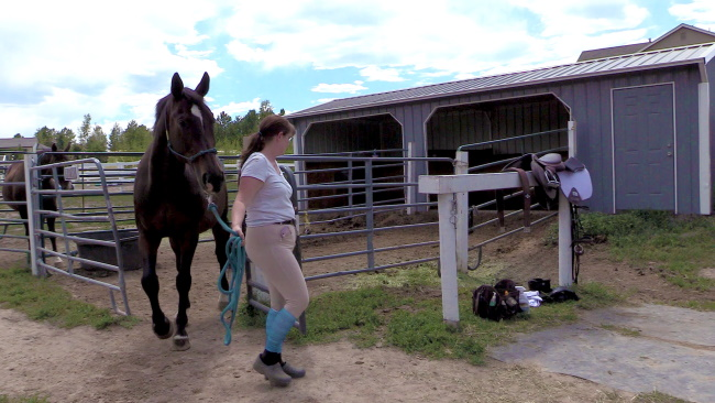 Getting a horse from a stall