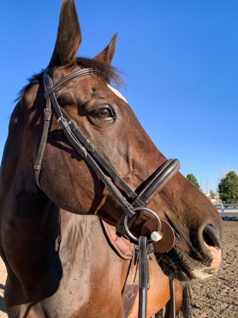 Come Meet My Horses