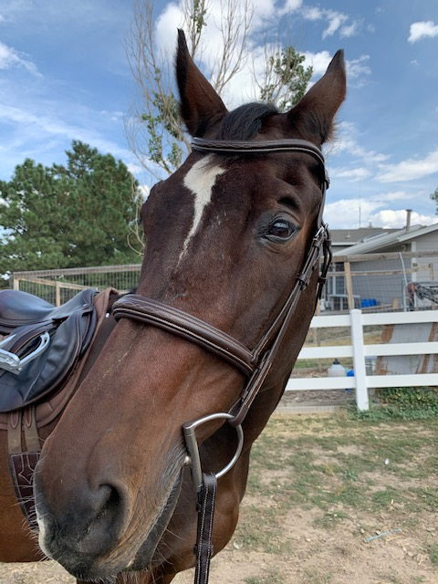 Is More Expensive Tack Really Better?