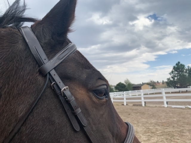 Is Expensive Tack Better - Part II