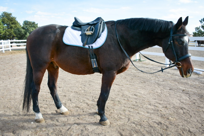 Changing Disciplines -Finding Affordable Horse Tack