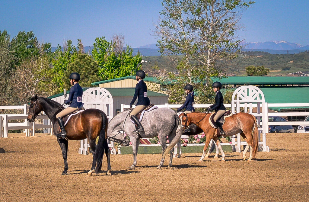 Horses lining up in a horse show class