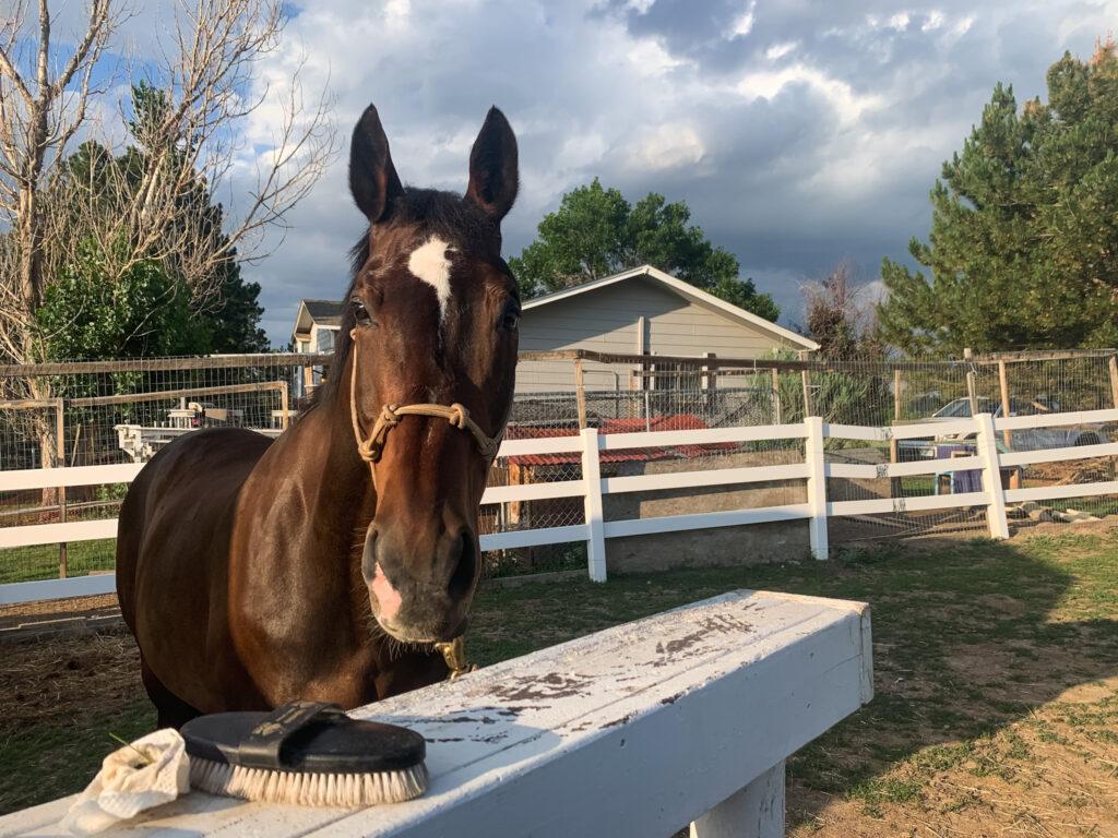 Free Online Horse Fair!